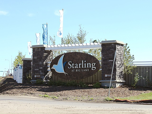 Photo of Starling