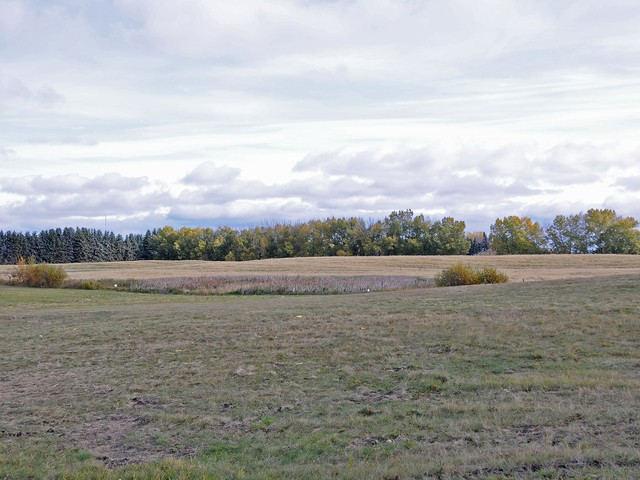 Photo of Meadows Area